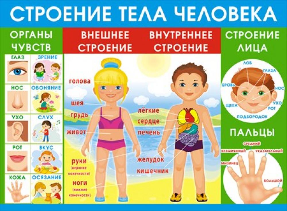 Плакат с человеком для детей